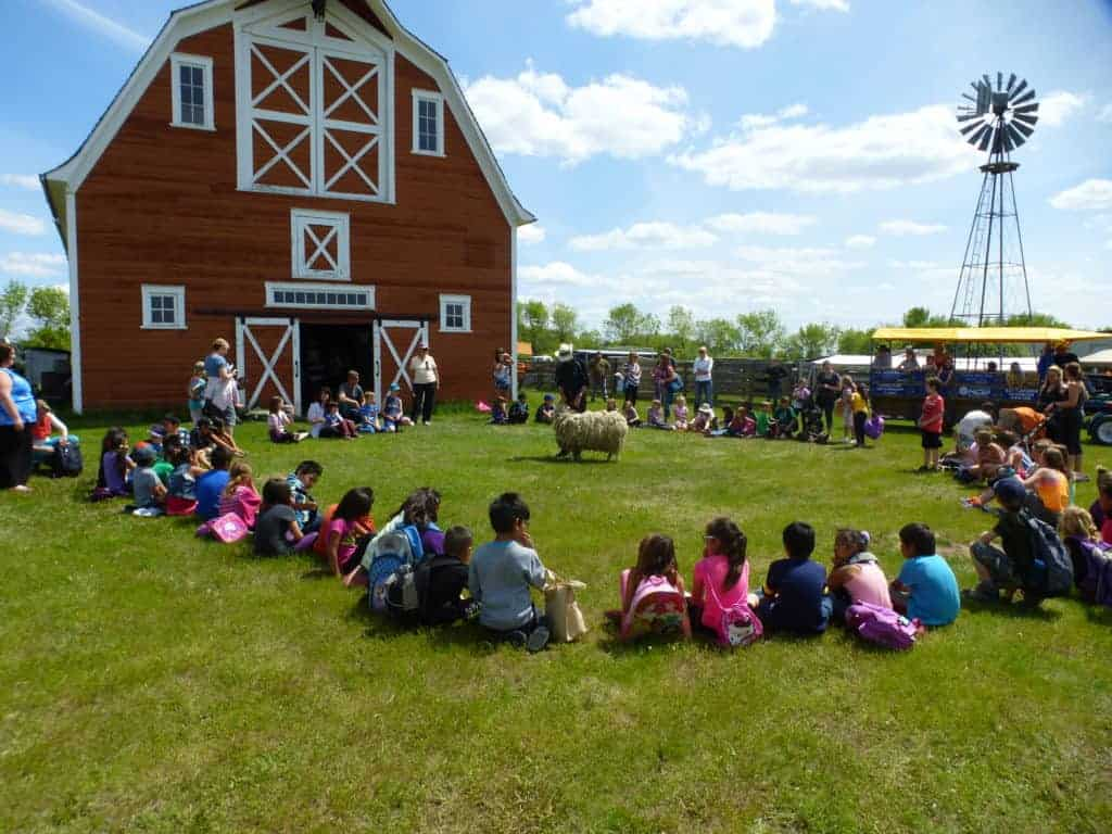 Students sit in a circle around a sheep shearing demonstration in front of a big red barn