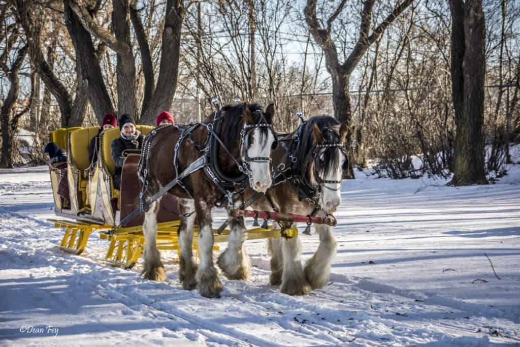 Winter transportation example - Horses pulling sleigh through the snow